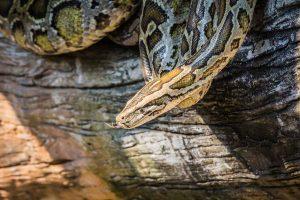 python on log
